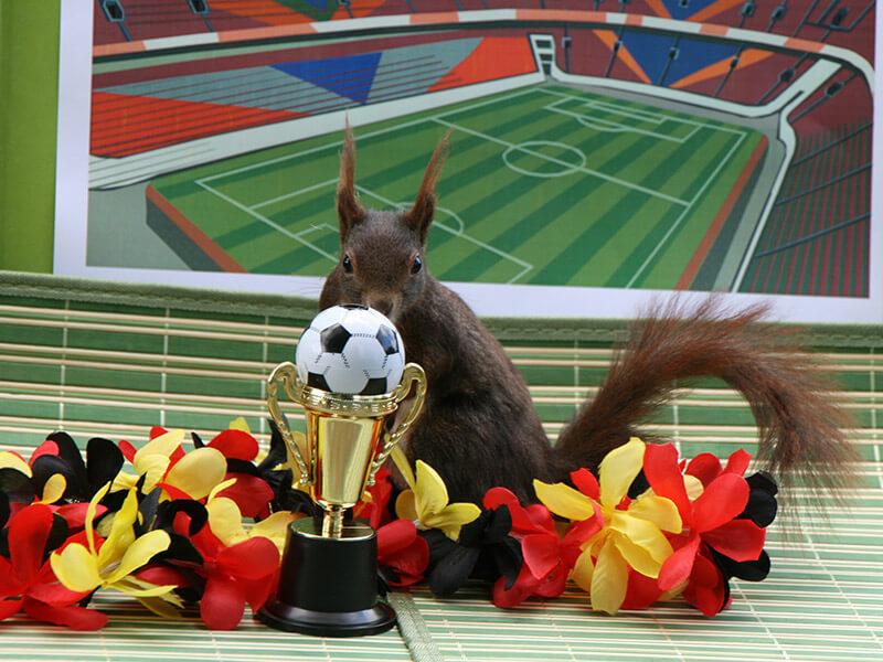 Hans-Hermann schaut die Fußball-WM