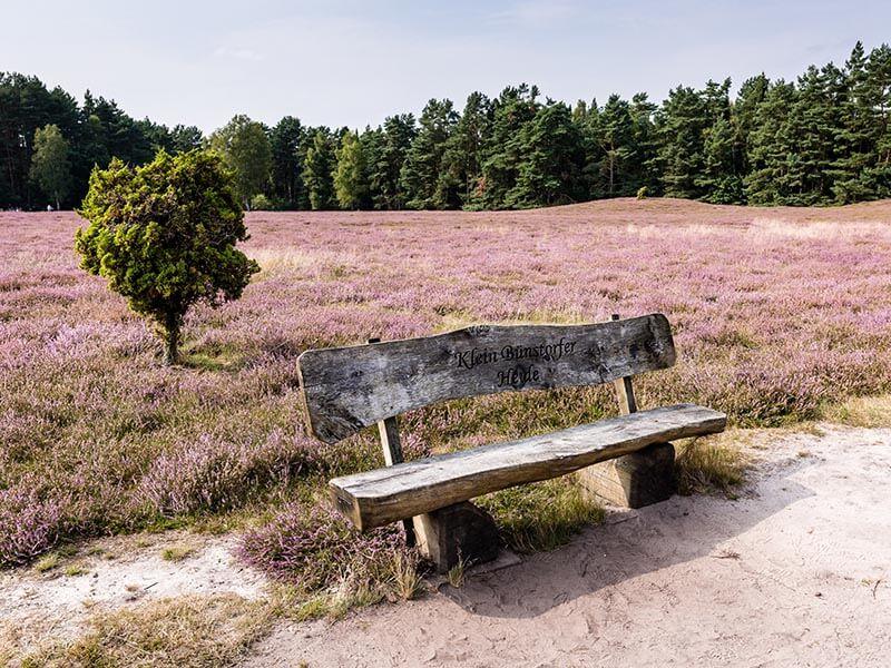 Bank in der Klein Bünstorfer Heide