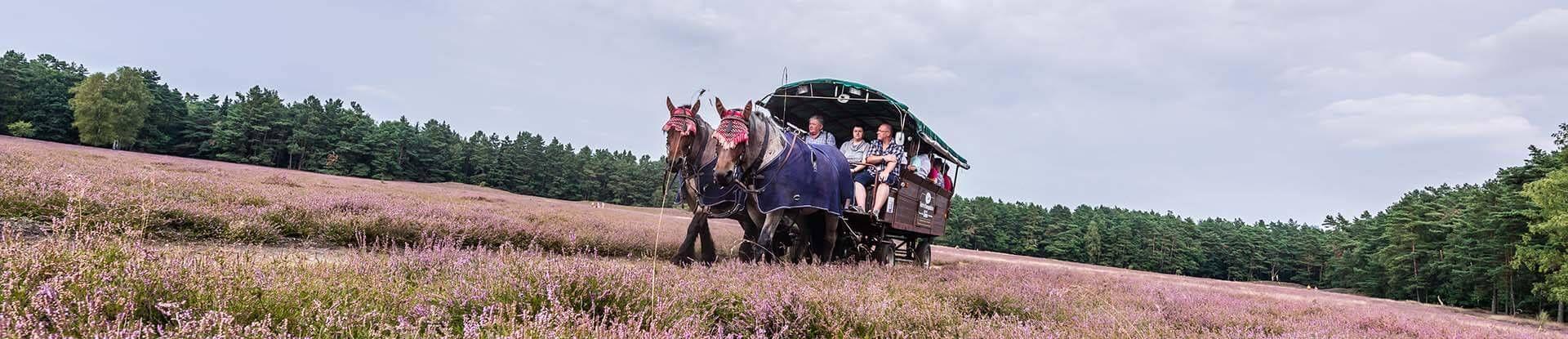 Planwagenfahrt durch die Klein Bünstorfer Heide