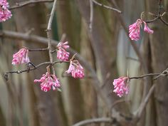 Blühende Pflanzen im Kurpark Bad Bevensen