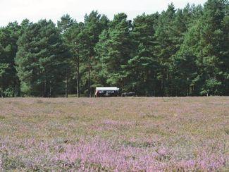 Planwagenfahrt Klein Bünstorfer Heide