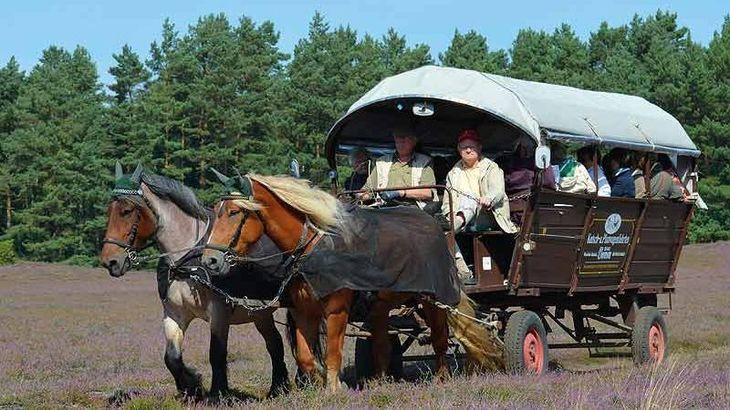 Ausflüge: Kutschfahrten in der Klein Bünstorfer Heide