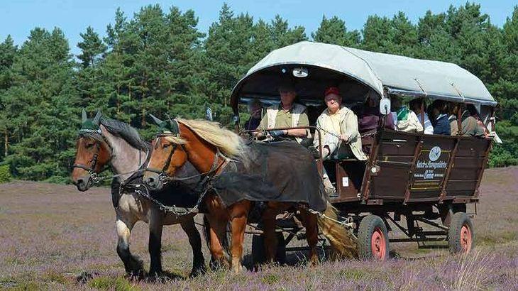 Planwagenfahrt in der Klein Bünstorfer Heide
