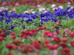 Frühling im Kurpark Bad Bevensen