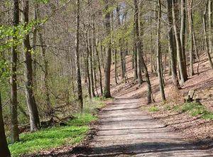 Waldweg entlang der Ilmenau