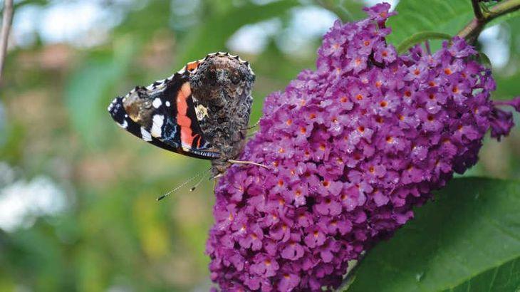 Schmetterlin im Kurpark