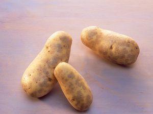 Kartoffelsorte Allians