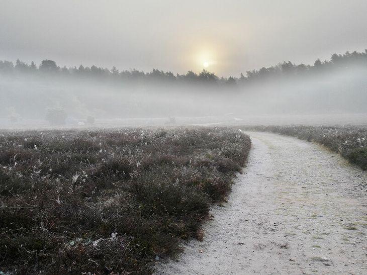 Klein Bünstorfer Heide im Morgennebel