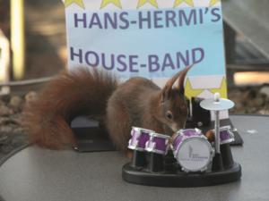 Hermis House Band