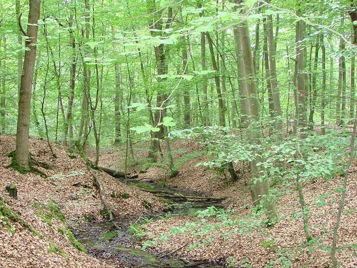 Wald bei Bad Bevensen