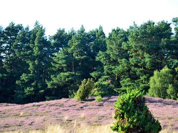 Hügelgrab in der Klein Bünstorfer Heide