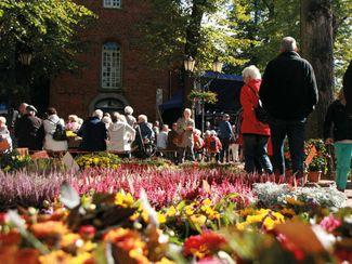 Blüten und Besucher des Heidekartoffelfestes
