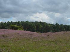 Klein Bünstorfer Heide