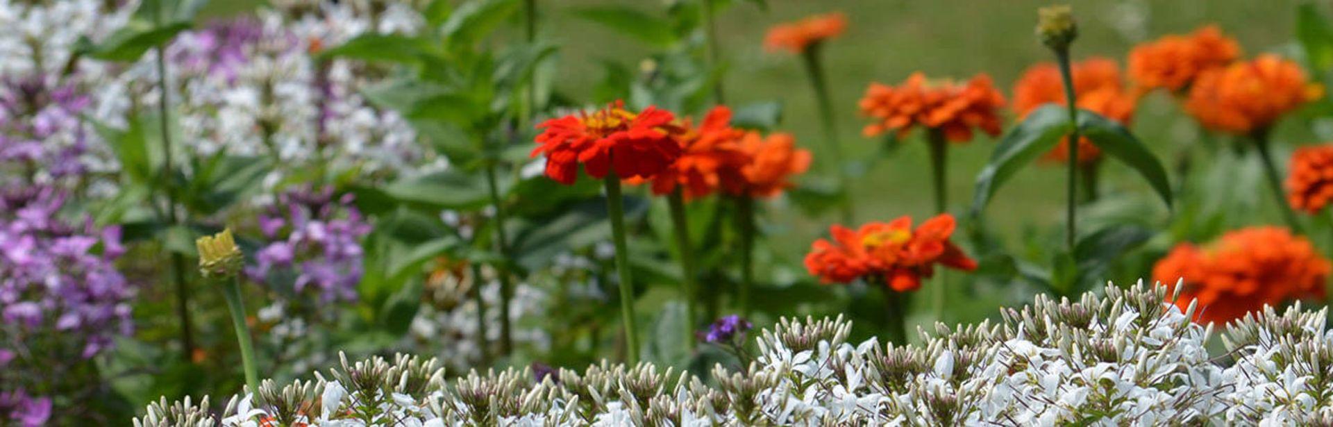 Buntes Blumenbeet im Kurpark